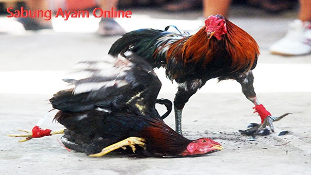 Judi Sabung Ayam Online Uang Asli Indonesia
